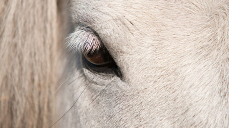intuitive horse therapy