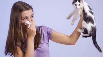 girl holding kitten away