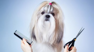 dog grooming 760x420