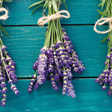 bunches-lavender